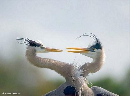 İkiz yaratılmış hayvanlar 10