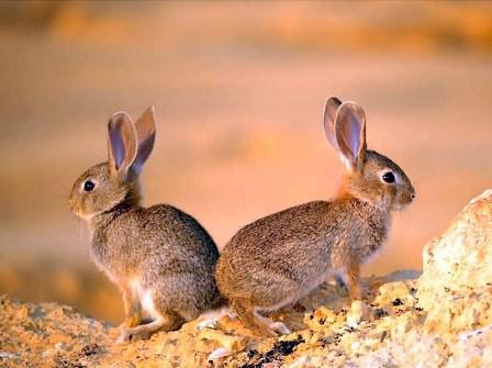 İkiz yaratılmış hayvanlar 11