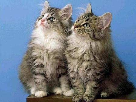 İkiz yaratılmış hayvanlar 15