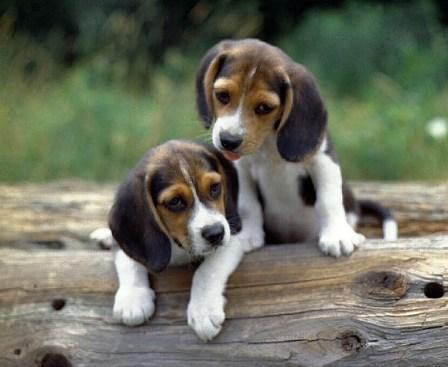 İkiz yaratılmış hayvanlar 21