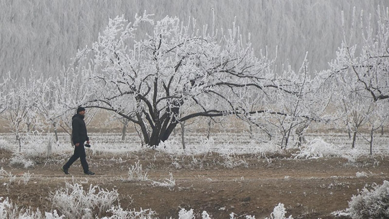 Beyaza bürünen kayısı bahçelerinin güzel görüntüleri 1