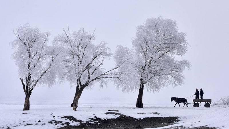 Kırağı tutan ağaçların güzelliği 1
