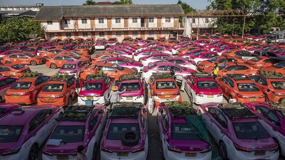 Kullanılmayan taksiler sebze bahçesine dönüştürüldü 1