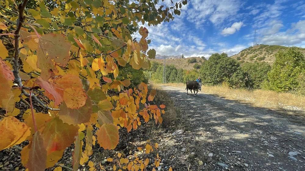 Salördek ormanları sonbahar tefekkürüne çağırıyor 1