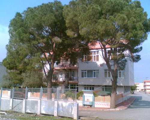 Binayı delip geçen ağaç 4