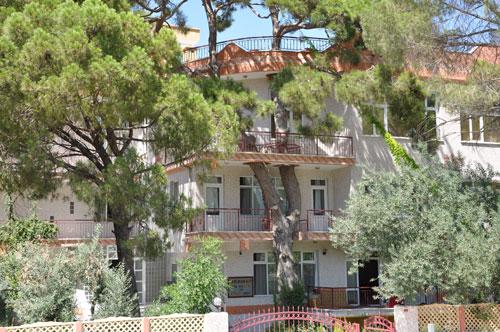 Binayı delip geçen ağaç 6