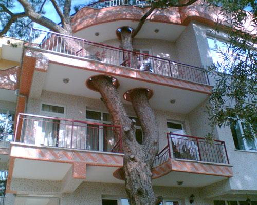 Binayı delip geçen ağaç 8