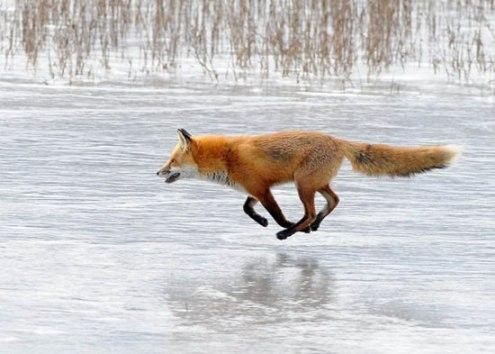 Bu hayvanlar ne yapıyor? 13