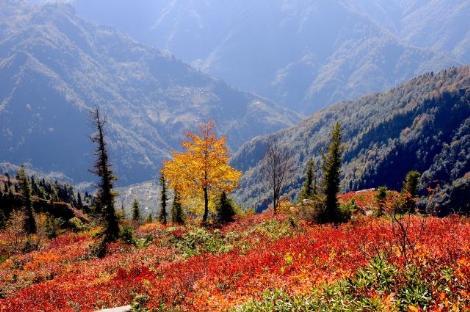 Karadeniz'de Sonbahar Renkleri 17