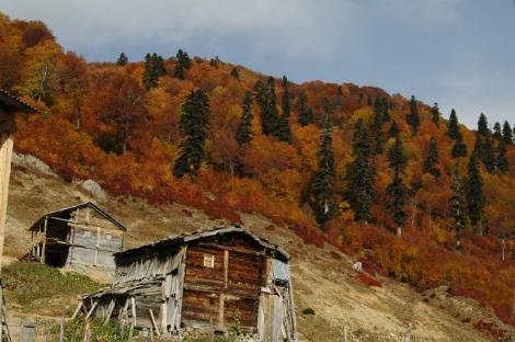 Karadeniz'de Sonbahar Renkleri 5
