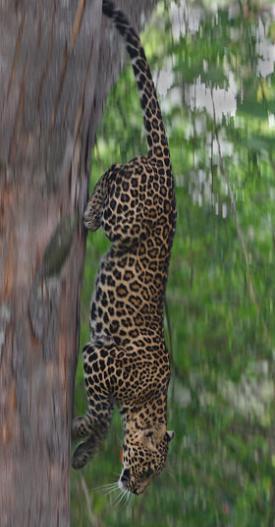 Hayvanlar Aleminden Kareler 15