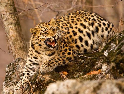Hayvanlar Aleminden Kareler 2