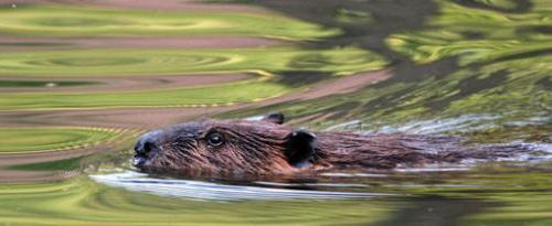 Hayvanlar Aleminden Kareler 26