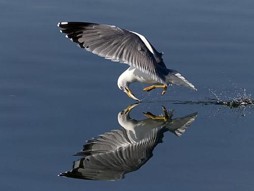 Kuşların dünyasına yolculuk 1