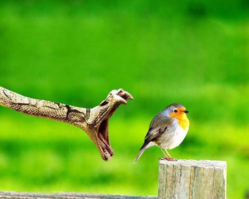 Kuşların dünyasına yolculuk 12