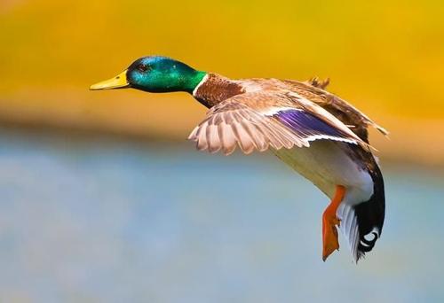 Kuşların dünyasına yolculuk 16