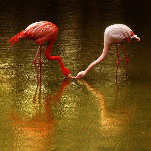 Kuşların dünyasına yolculuk 2