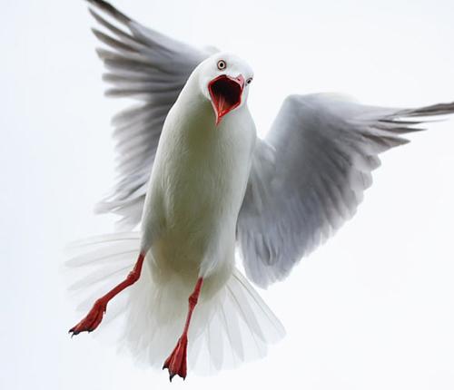 Kuşların dünyasına yolculuk 4