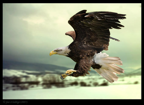 Kuşların dünyasına yolculuk 5