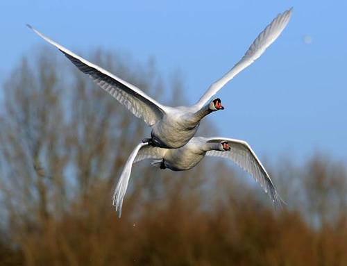 Kuşların dünyasına yolculuk 6