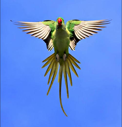 Kuşların dünyasına yolculuk 7