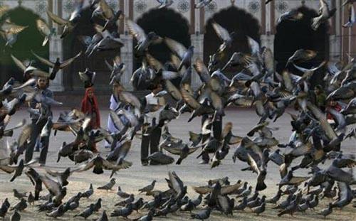 Bir güvercin gözüyle yaşam... 1