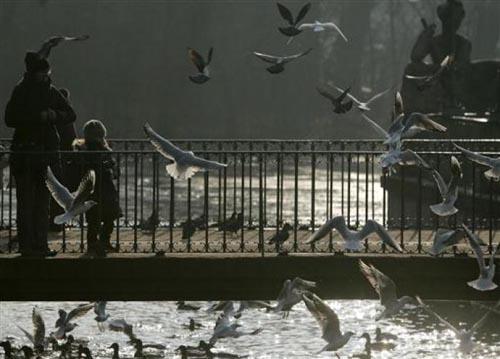 Bir güvercin gözüyle yaşam... 10