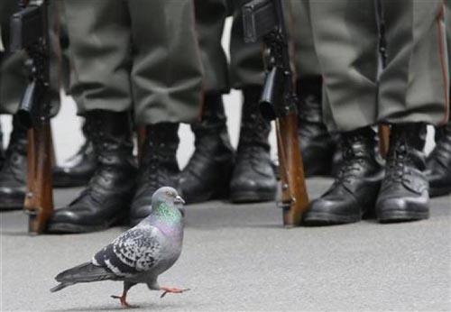 Bir güvercin gözüyle yaşam... 11