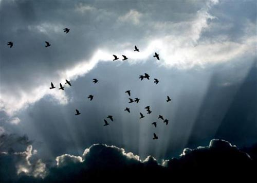 Bir güvercin gözüyle yaşam... 13