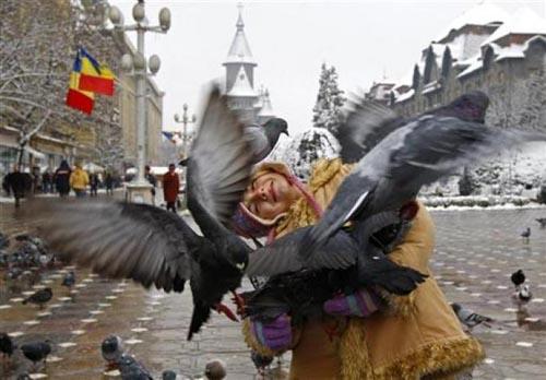 Bir güvercin gözüyle yaşam... 3
