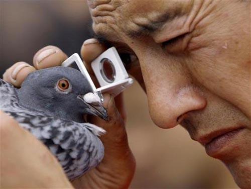 Bir güvercin gözüyle yaşam... 6