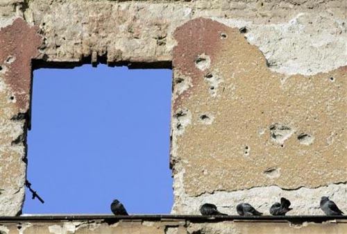Bir güvercin gözüyle yaşam... 7