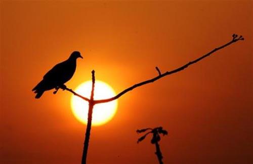 Bir güvercin gözüyle yaşam... 8