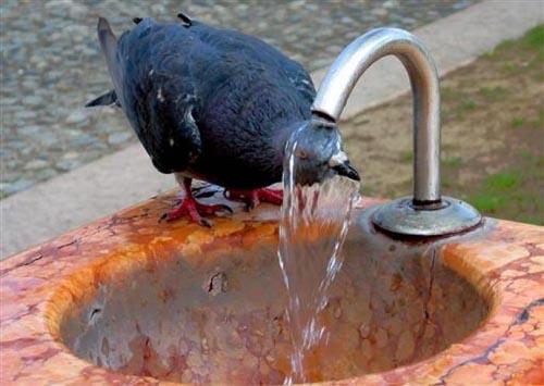 Bir güvercin gözüyle yaşam... 9