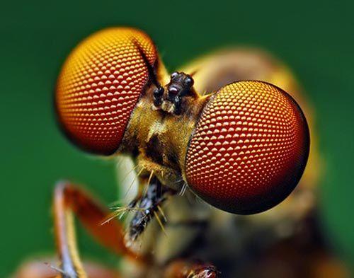 Dünyanın en güzel sineği 1