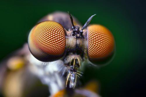 Dünyanın en güzel sineği 2