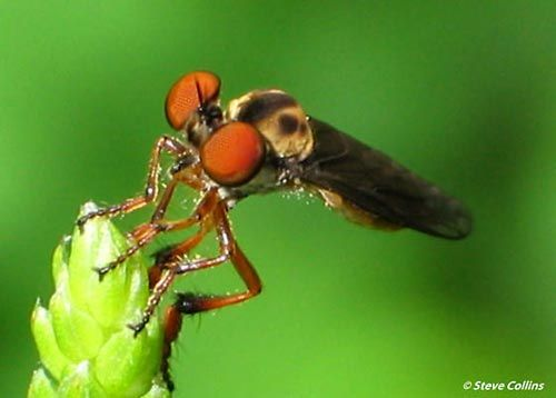 Dünyanın en güzel sineği 3