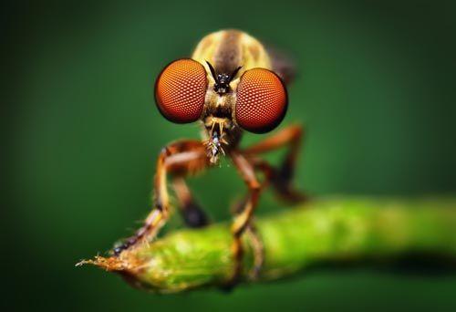 Dünyanın en güzel sineği 4