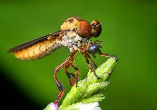Dünyanın en güzel sineği 5