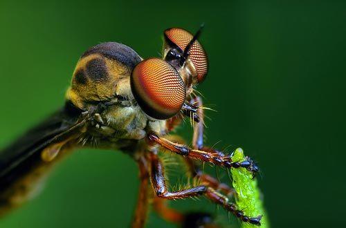 Dünyanın en güzel sineği 6