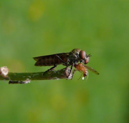 Dünyanın en güzel sineği 8