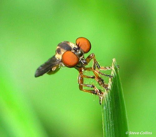Dünyanın en güzel sineği 9