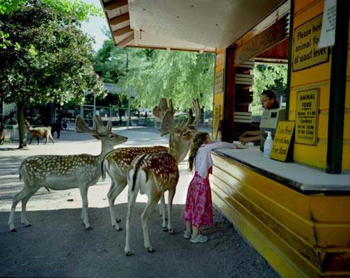 Hayvanlar alemine yolculuk 30