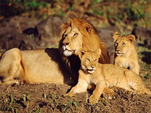 Nesli tükenmekte olan hayvanlar 3