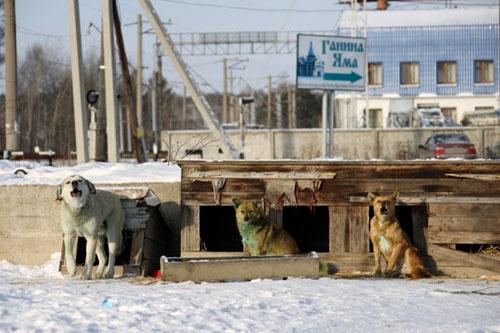 Köpekler neden yeşile dönüşüyor? 4