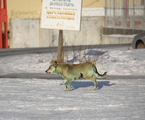 Köpekler neden yeşile dönüşüyor? 5