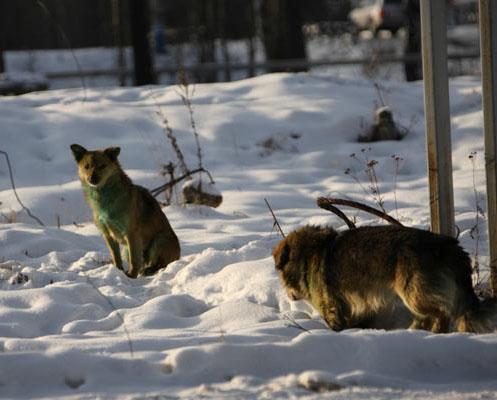 Köpekler neden yeşile dönüşüyor? 8