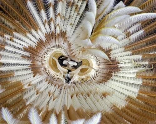 Denizler altındaki canlı sanatlar(2) 1