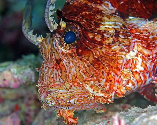 Denizler altındaki canlı sanatlar(2) 18