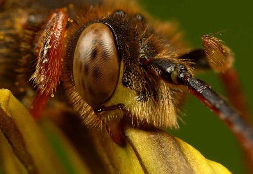 Böceklerdeki muhteşem sanat 1